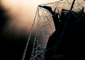 Macro, nature, photography, dew, web, Chandra Achberger